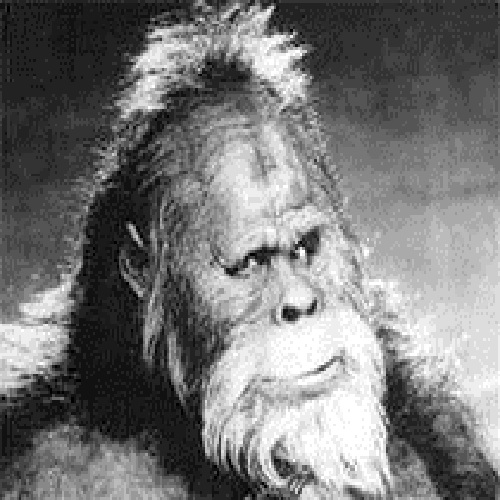 Bigfoot's Hollywood headshot.