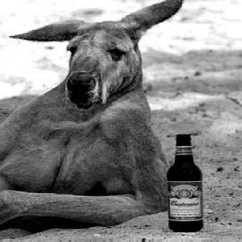 kangaroo_creepy