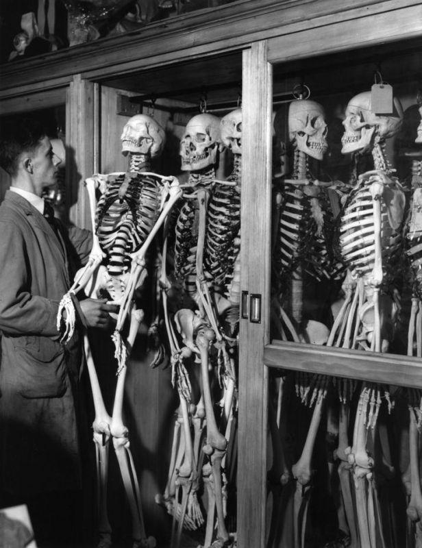 skeleton_dinner